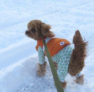 IMG_6683雪