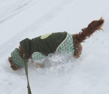 IMG_6721雪散歩