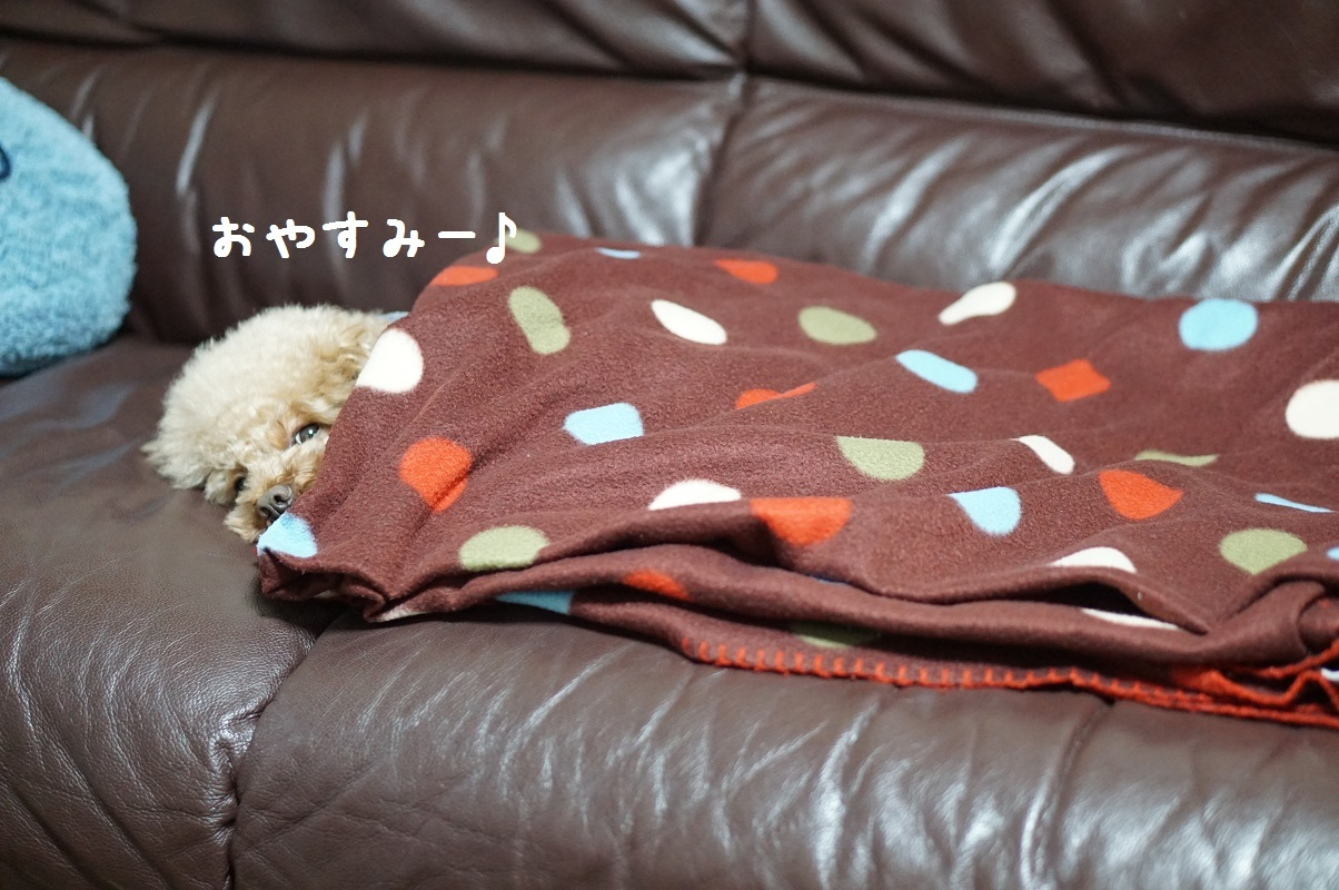 おやすみ1