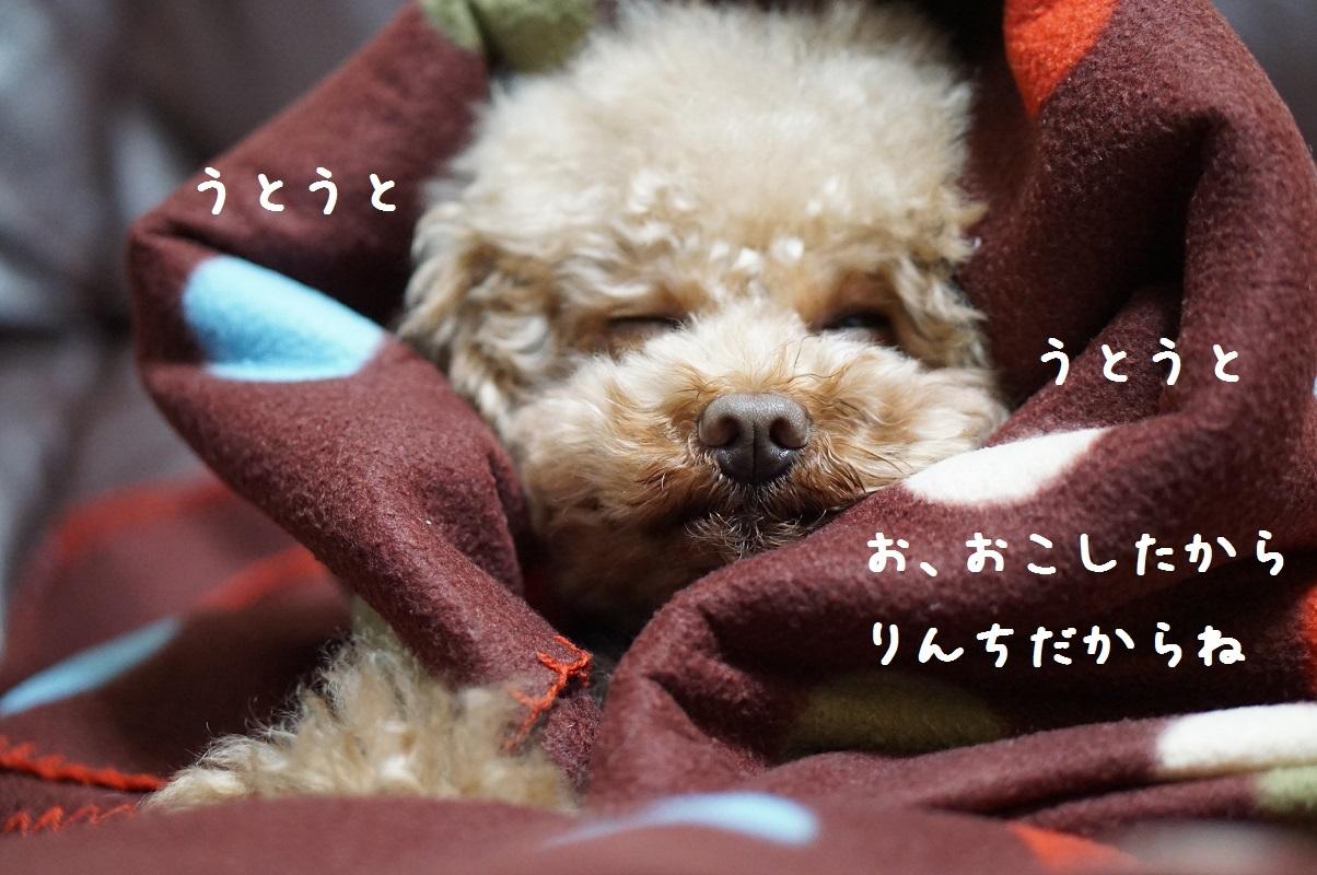 おやすみ6