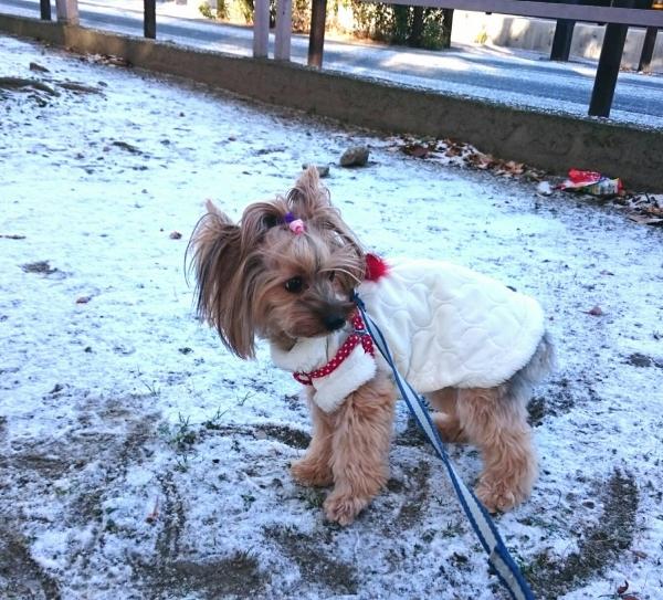 初めての雪②