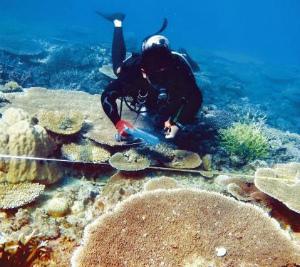 CxaPhJFUQAE36Mi大浦湾のサンゴ「健全」
