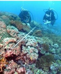 C17J8QDUcAAY617本島周辺のサンゴ良好