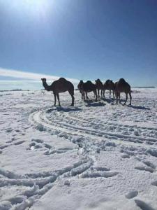 C2szzv4WgAAアルジェリアで雪N9sD