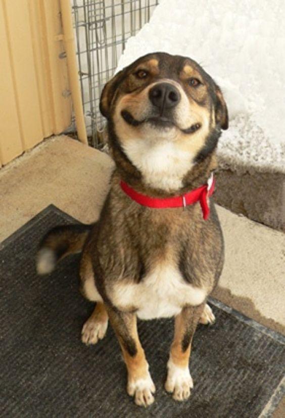 Dog smil