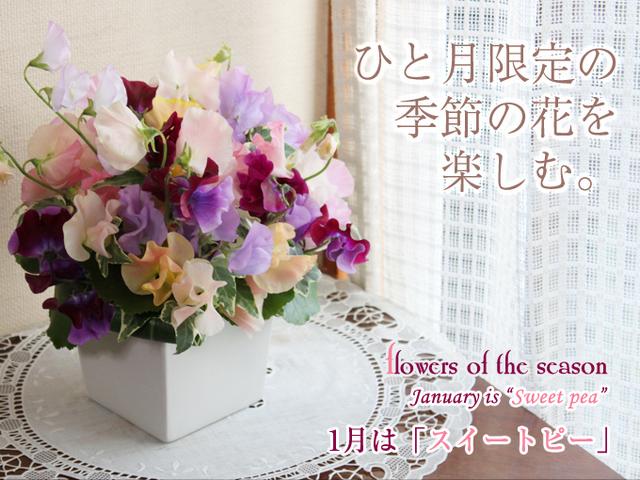 スイートピー 旬 花 アレンジ 可愛い 花束