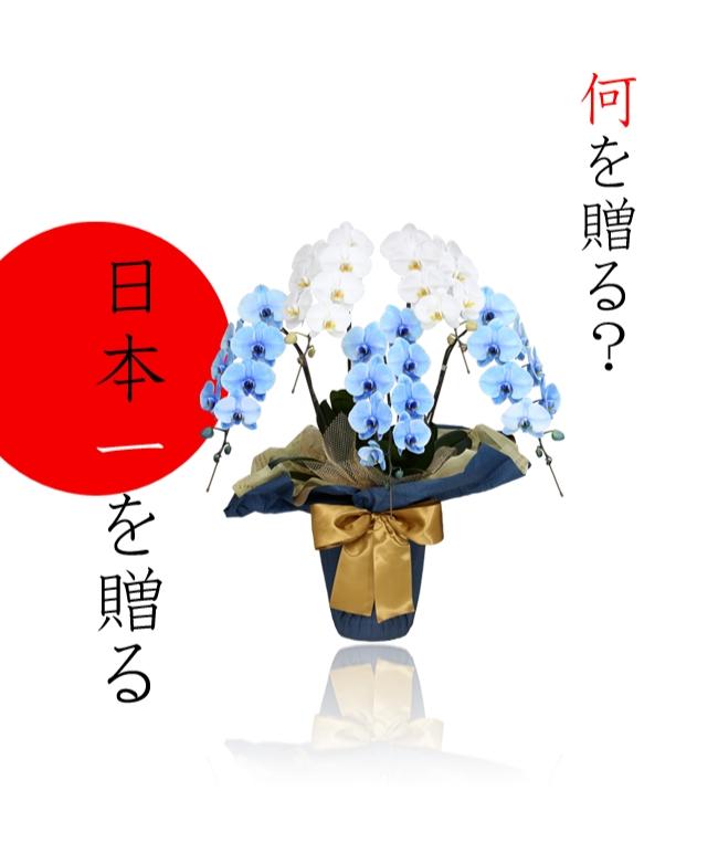御年賀 縁起 胡蝶蘭 富士山 元日 青 花 花束