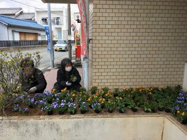 ボランティア 花壇 パンジー ビオラ 豊川 花屋 花夢