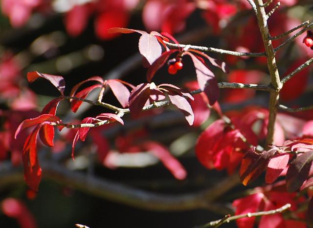 サワダツの紅葉がきれい