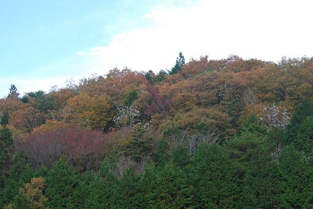 山の尾根は雑木林