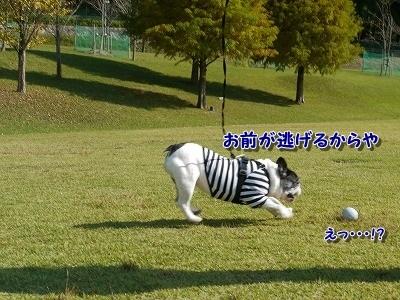 青山公園 (6)
