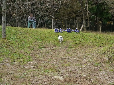 ドッグラン2 (2)