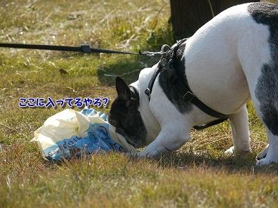 ボール (1)
