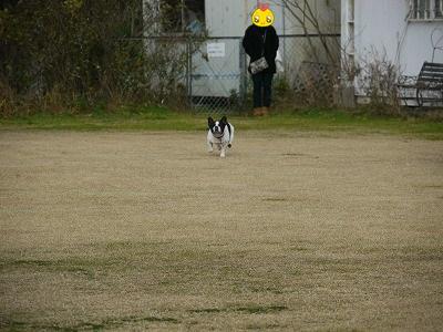 飛行犬 (3)
