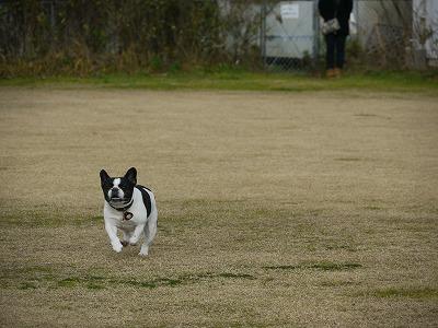 飛行犬 (4)