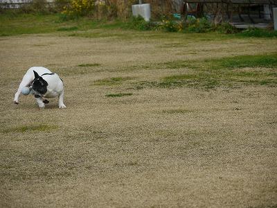 飛行犬2 (3)