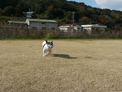 飛行犬2 (7)