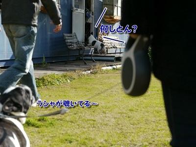 飛行犬4 (1)
