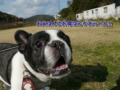 飛行犬4 (5)