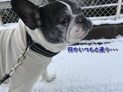 初雪 (4)