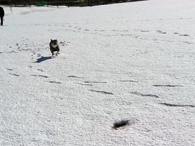 雪遊び (3)