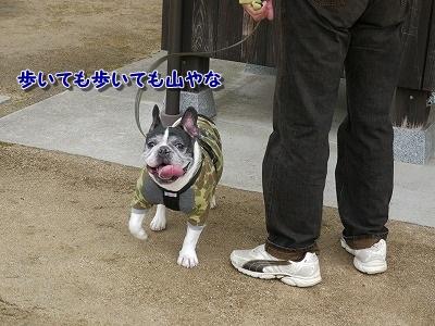 あいな里山公園2 (1)