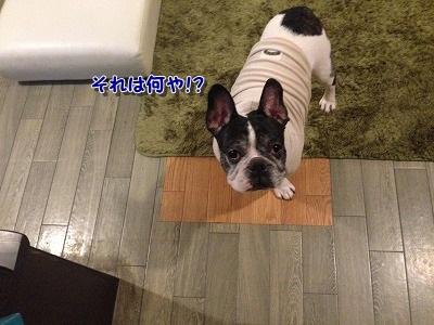 お出かけ? (1)