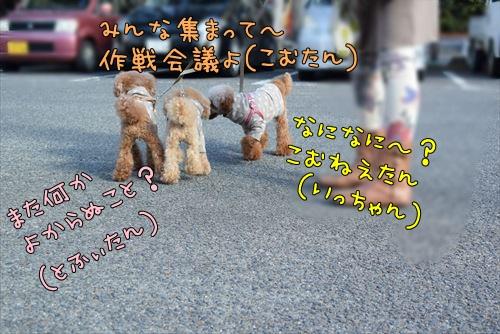 ADSC_4344_M.jpg