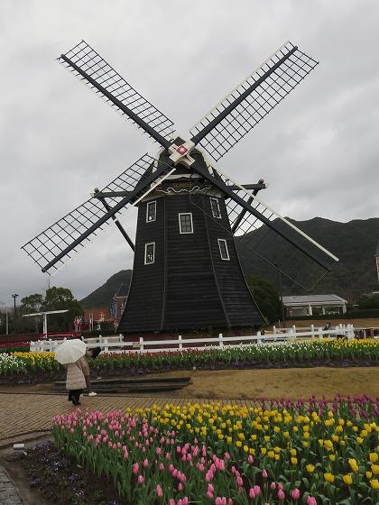 オランダの風車とチューリップ