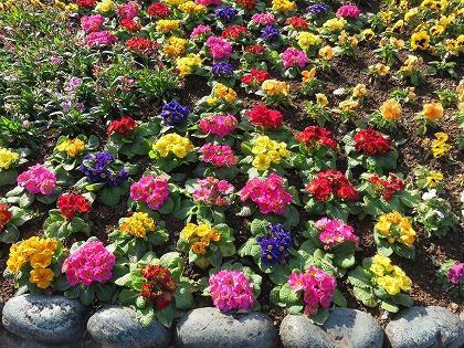 グラバー邸の花壇 (2)