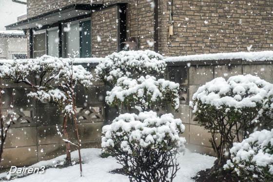 異例 11月の初雪