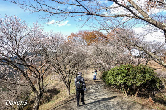 藤岡市桜山公園