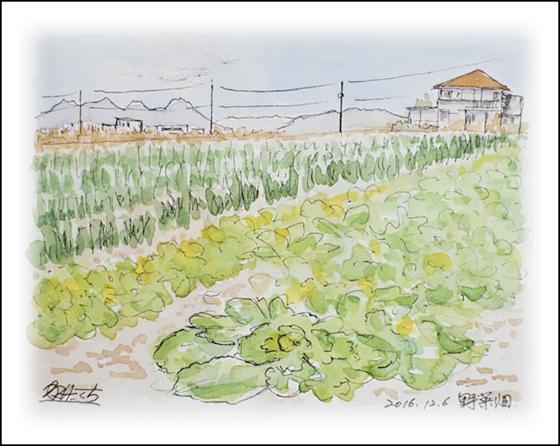 散歩道の野菜畑