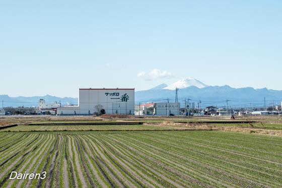 浅間山と麦畑