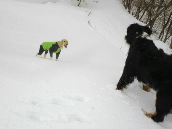 雪山&雪原の季節到来16