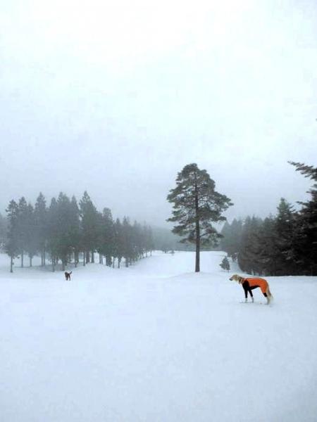 雪山&雪原の季節到来1