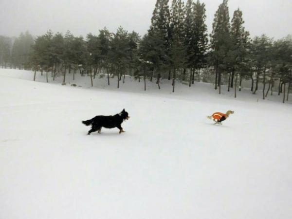 雪山&雪原の季節到来2