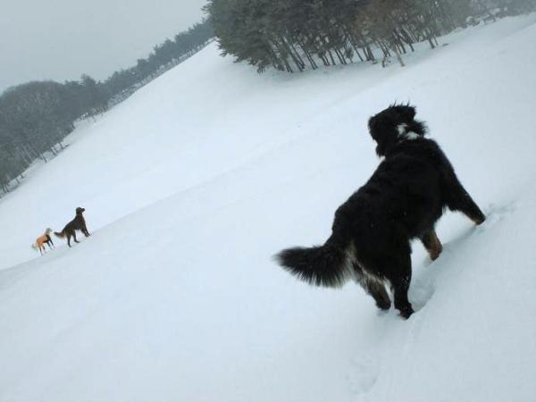 雪山&雪原の季節到来3