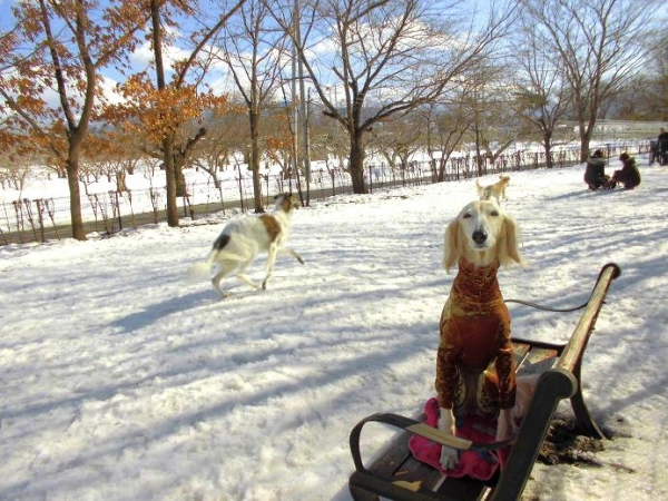 雪山&雪原の季節到来8