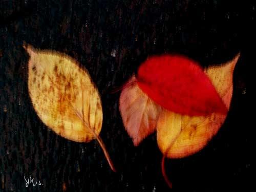 ブレ落ち葉