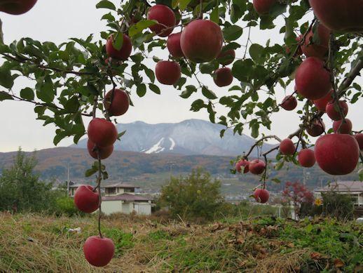 リンゴの町の