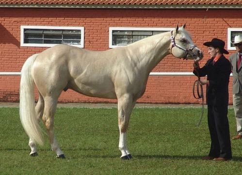 1s-1024px-Quarter_Horse(REFON)-cleaned