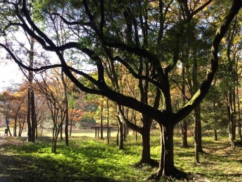 木の佇まいに惚れ惚れする