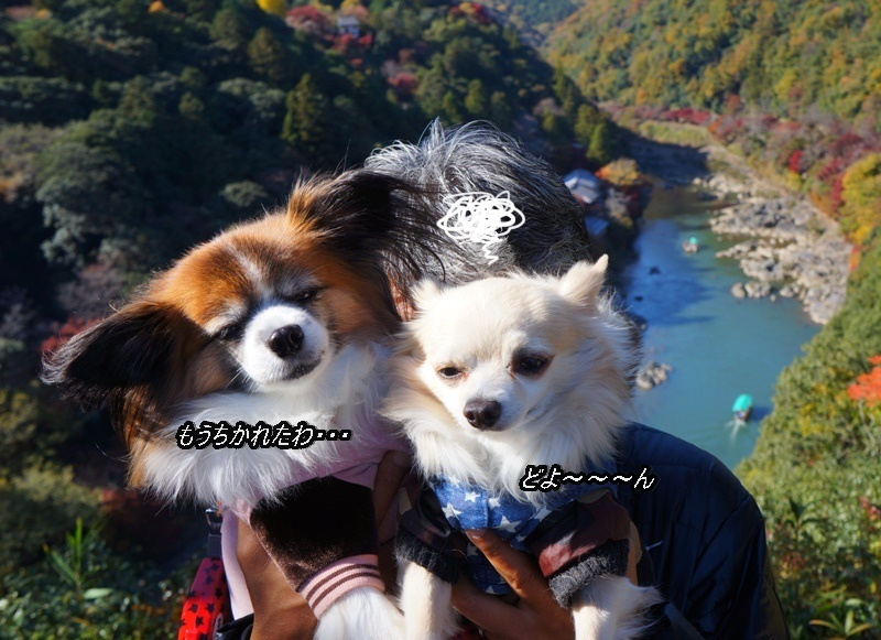 DSC03596_20161128145002bbb.jpg
