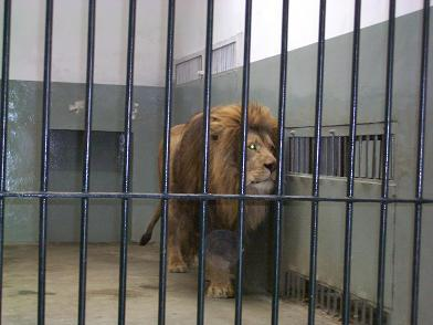 ライオン天津