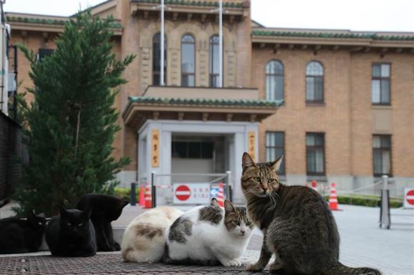 山梨県庁の猫