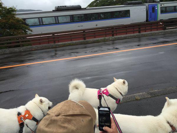 2016.9.8 大沼公園3