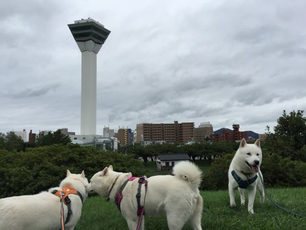 2016.9.9 五稜郭公園4