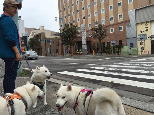 2016.9.9 朝の散歩2