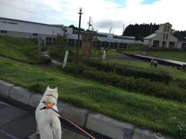 2016.9.10 道の駅しちのへ3